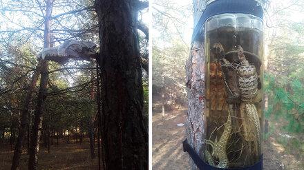 Воронежцы нашли в лесу череп и банку с мёртвой змеёй