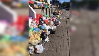 «По мусору – в детсад». Воронежец пожаловался на помойку на тротуаре