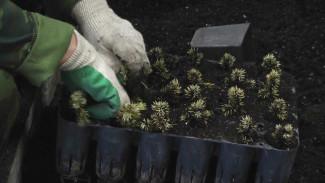 Депутаты облдумы обсудили восстановление и сохранение воронежских лесов