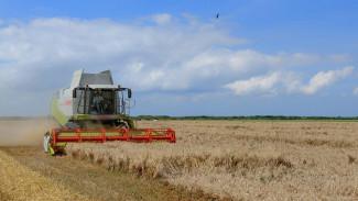 Воронежские аграрии взялись за четвёртый миллион