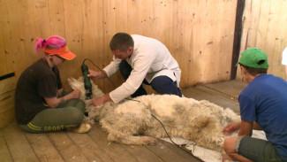 В Воронежском зоопарке открыли цех мороженого и барбершоп для животных