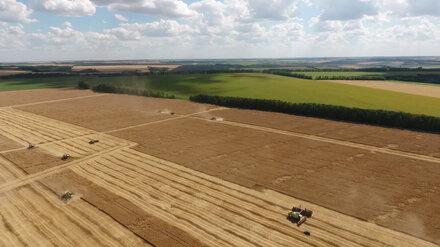 В Воронежской области собрали 5 млн тонн зерна
