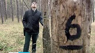 В зоне поражения корневой губкой оказались тысячи гектаров воронежских лесов