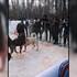 В санатории под Воронежем прошли кровавые собачьи бои