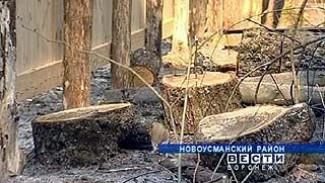 Дубовую аллею Новоусманского района начали потихоньку вырубать