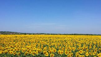 Метеорологи спрогнозировали пик жары в Воронежской области