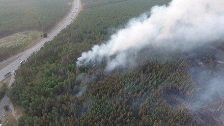 В Воронежской области потушили один из двух крупных лесных пожаров