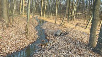 В Воронеже фекальная речка затопила проезжую часть и испортила воздух в уникальной дубраве