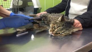 Воронежцев попросили о срочной помощи для семи спасённых кошек умершей хозяйки