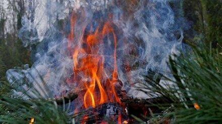 Воронежцы сообщили о пожаре в шиловском лесу