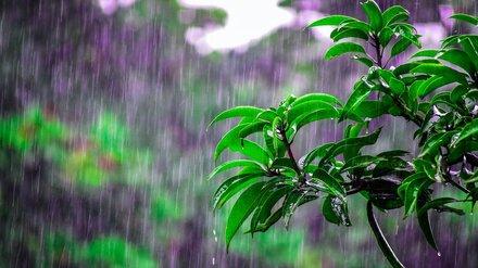 Метеорологи рассказали о погоде в выходные в Воронежской области