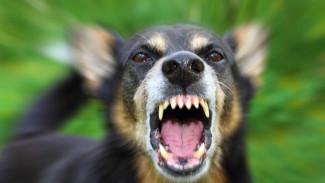 За полгода случаи бешенства животных проявлялись в 17 районах Воронежской области