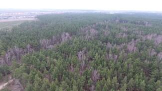 Почти 1700 га леса посадят в Воронежской области