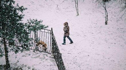 МЧС предупредило воронежцев о снежной буре с дождём