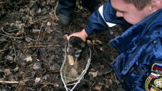 В Воронеже спасатели достали провалившихся в узкую трубу 3 щенков