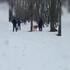 Полиция заинтересовалась сообщениями о кровавых собачьих боях в санатории под Воронежем