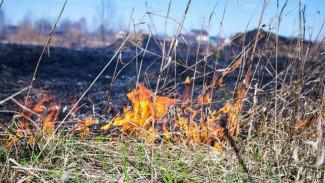 В Воронежской области объявили пожароопасный сезон