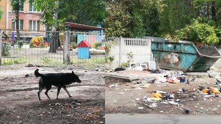 Воронежцы пожаловались на «утопающие» в мусоре дворы