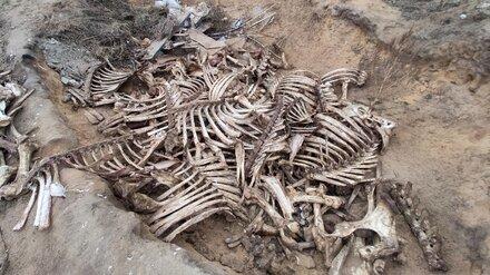 За воронежской больницей нашли кладбище костей