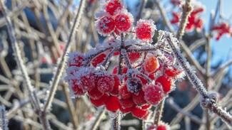 МЧС предупредило воронежцев об аномальных холодах