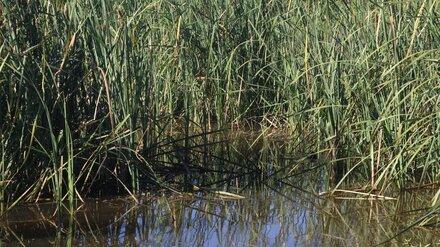 В Воронеже двое детей провалились в болото
