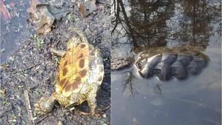 Глава «Нескучного дня» показал жуткие фото с места массовой гибели черепах под Воронежем