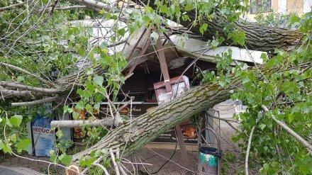 Спасатели получили почти 100 заявок об упавших в Воронеже при урагане деревьев
