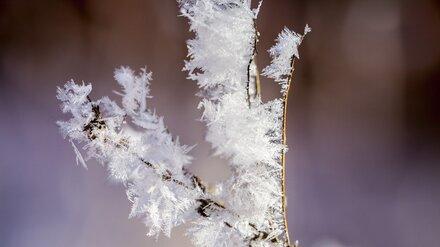 Воронежцев предупредили о 19-градусных морозах