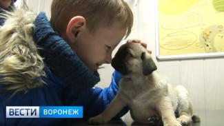 В ветеринарных клиниках Воронежа ждут бума после новогодних праздников