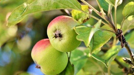 В Воронеже защитники яблоневого сада воспротивились застройке в районе СХИ