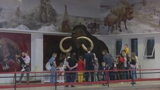 Пандемия подстегнула интерес воронежцев к «Ночи музеев»