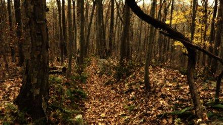 В лесу в Воронежской области нашли тело пропавшего грибника