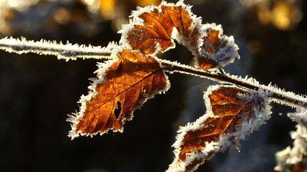 Воронежские синоптики пообещали заморозки на последней неделе октября