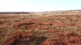 В Воронежской области уничтожили огромную плантацию конопли