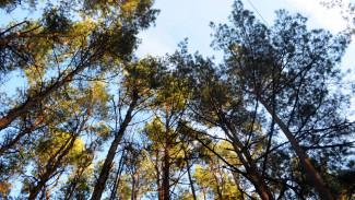 Боимся, что застроят. Воронежцы потребовали вернуть «Северный лес» в состав «зелёного пояса»