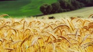 Воронежские предприятия «Продимекса» начали подготовку к севу озимой пшеницы