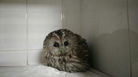 Воронежский центр диких животных попросил помощи на лечение птиц
