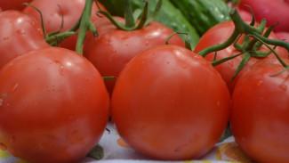 В Воронежской области построят тепличный комплекс мощностью 45 тыс. тонн томатов в год