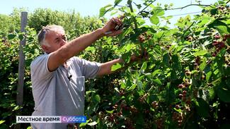 Воронежский агроном рассказал о правилах выращивания ежевики