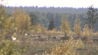 В Воронежской области на выгоревшем Кожевенном кордоне посадили новые деревья
