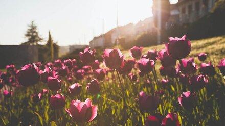 Самым тёплым днём на удлинённых майских в Воронеже станет Пасха