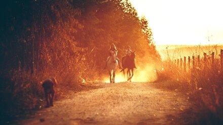 Полюбоваться анемонами и покататься на лошадях. Чем воронежцам заняться в длинные майские