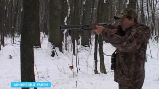 Село в Аннинском районе атакуют лисы