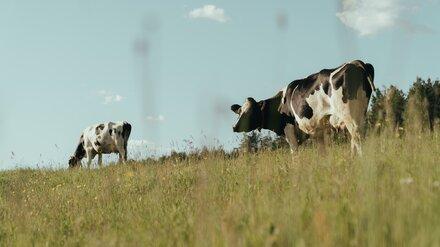 Фермер из Воронежской области попался на махинациях с субсидией в 653 тыс. рублей