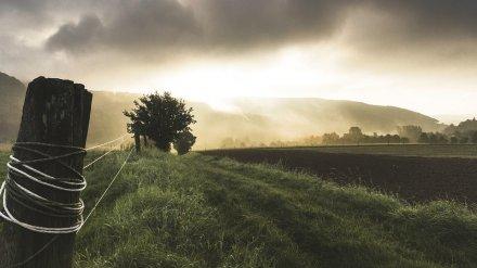 Пропавшую в Воронежской области пенсионерку нашли мёртвой в поле