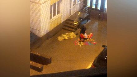 Воронежцы сообщили о трупе во дворе многоэтажки