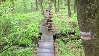 На Большой воронежской экотропе неизвестные разрушили мост через болото
