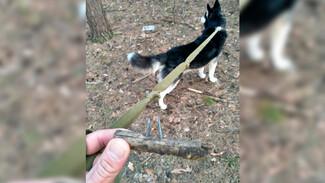 Догхантеры разбросали в воронежском парке сосиски и палки с гвоздями