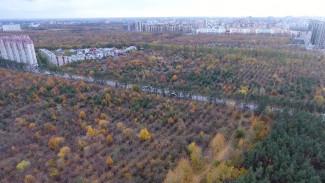 Яблоневый сад и фигурная роща. Что осталось за пределами «зелёного пояса» Воронежа
