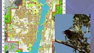 Орнитологи подслушивают и подглядывают за птицами, чтобы составить карту